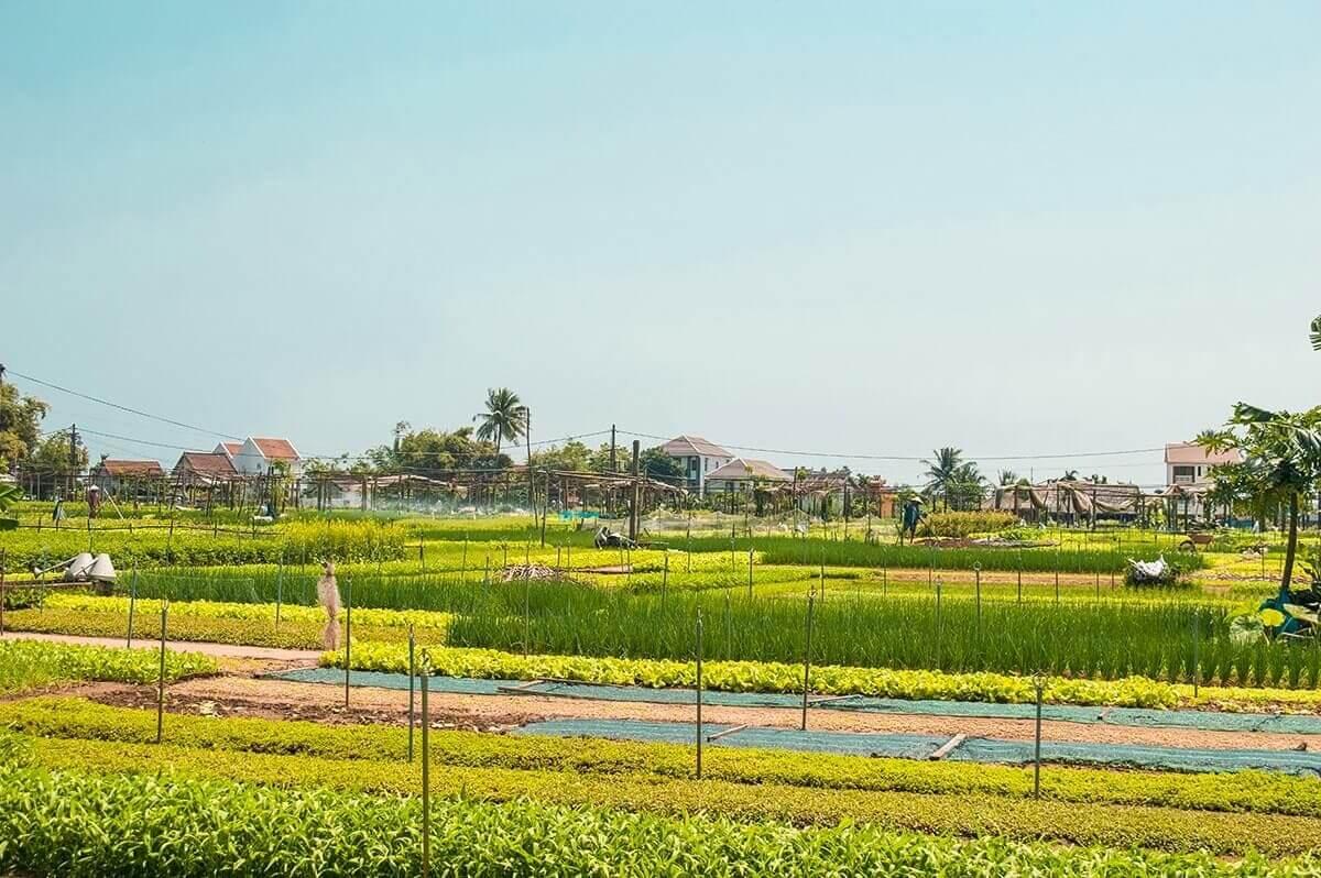 Visiting Tra Que  Vegetable Village