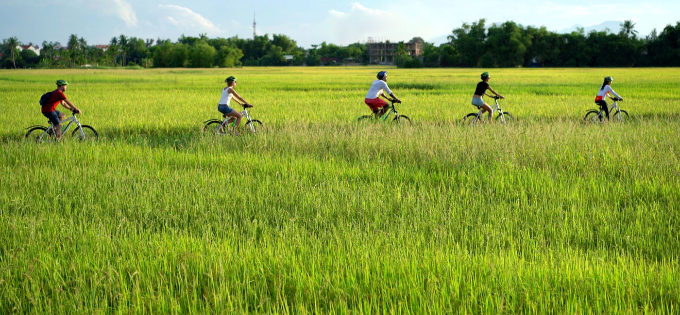 paddy-fields.jpg